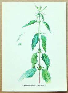 prodám starý atlas kvìtin a rostlin