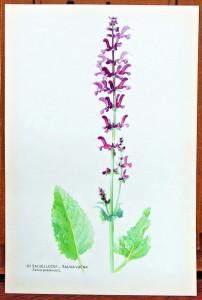 atlas rostlin volné listy k zarámování
