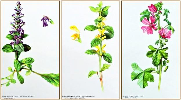 stary atlas kvetin a rostlin prodam