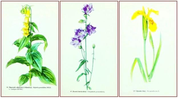 prodám starý atlas květin a rostlin