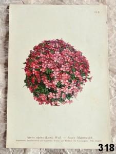 atlas kvìtin jednotlivé listy