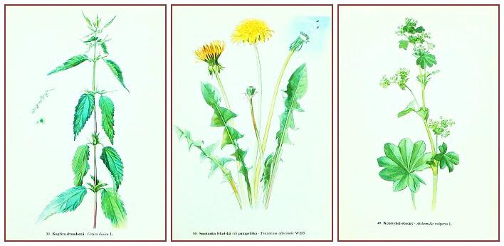 starý atlas kvìtin a rostlin do rámeèku